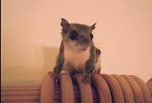 Flying squirrels O.O / All flying squirrels, all the time