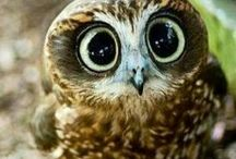 Owl the things / All things Owl