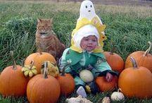 Cute / Funny Animals / Cute or funny animal antics.