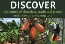 DISCOVER / The source of chocolate, medicinal plants, and more on a walking tour