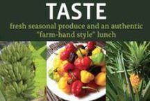 """TASTE / Fresh seasonal produce and an authentic """"farm-hand style"""" lunch"""
