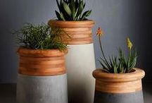 *Indoor Plantz