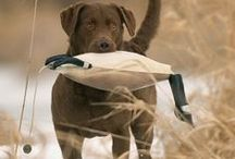 We Live Outdoors / by Gander Mountain
