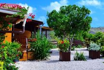 L O D G E S @ JANKOKLODGES CURACAO / The holiday apartments and studio's at Jan Kok Lodges, Curacao.