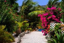 G A R D E N @ JANKOKLODGES CURACAO / Jan Kok Lodges' garden is a place full of colorful flowers, trees and palmtrees. Come over and escape the crowd.