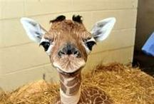 Adorable Animals / I love animals... do you? :)