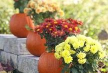 Fall Ornamental Décor / Learn the newest trends for fall home décor, centerpieces, arrangements, and other autumn inspirations.  We'll show you easy, beautiful, and clever ideas for displaying your harvest – perfect for the DIY farm, rustic or fall weddings and home crafts! Constructed from corn, pumpkins, chrysanthemums, zinnias, sunflowers, and more that you can grow from seeds and plants in your own garden! Visit www.harrisseeds.com to get started.