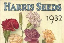 """Harris History / Take a trip back in time with us!  Find vintage photos, burlap bags, seed packets, catalog designs, and more here. Harris Seeds began catalog operation in 1879 in Rochester, NY. It evolved from the efforts of Joseph Harris and his business philosophy: """"Offer my customers a quality product at a fair price and they will return."""" Visit us at www.harrisseeds.com to learn more."""