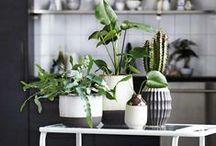 Sukkulenten / Sukkulenten als Dekoration folgen ihren eigenen Regeln von Schönheit: Ihre bizarren Formen erinnern an kleine Kunstwerke. Folgen Sie der grünen Faszination – mit schönen Schalen zum Pflanzen aus Glas, Beton oder Keramik!