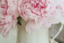 Roses & Cie