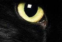 I <3 black cats...
