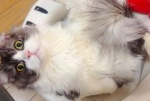 cats / かわいいねこちゃん