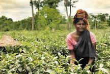 Bangladesh travels / Natural beauty and beautiful people of Bangladesh