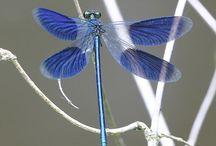 Dragonflies & Mystical