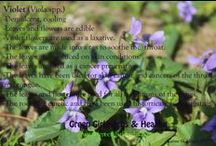 Healing Herbs / The Sacred Medicine Plants are all around us! Learn about the healing plants around the world.