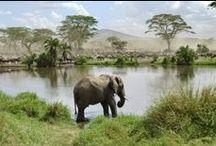 @Africa, savana