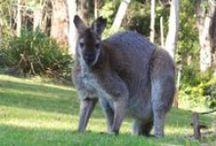New South Wales, Australia / New South Wales, Australia
