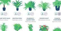 Plant Q&A / Advice for plant care
