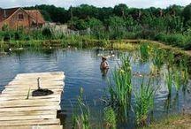 Medence-tó