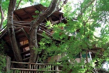 Treehouses / Ever wanted to live in a tree house?