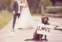 Weddings! Involve the kids (and pets)!