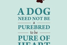 Adopt don't buy love / Been there done it - ADOPT DON'T BUY... if you did SHAME ON YOU......../
