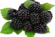 More -  Blackberry / Vendita Online Piante di More in vaso - Blackberry Trees Shop Online - http://europlantsvivai.com - http://piantedafrutta.com