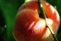 I Frutti - The Fruits / Vendita Online Piante ad Alberi da Frutto - Sale Online Fruit Plants and Trees http://europlantsvivai.com - http://piantedafrutta.com
