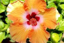 Piante Ornamentali - Ornamental Plants / Vendita Online Piante Ornamentali - Sale Online Ornamental Plants