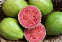 Guava / Vendita Online Piante di Guava in vaso. Sale Online Guava Trees in pot.