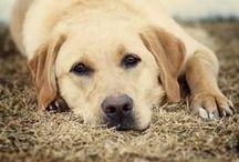 Puppy&Pet Photo