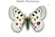 #PARNASSIUS INSPIRATION / Nature and feelings that bring me to PARNASSIUS