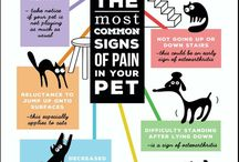 Pet Care / Here's to the health of your fur and feathered family members.