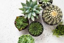 Succulents / Succulents & cacti