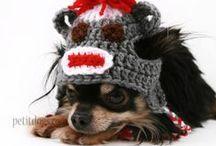 Dog DIY - Roxy