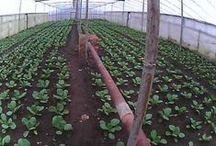 Наш Огород / Все об огороде и растениях