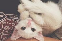 Cats to steal / Adorable !