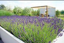 Garden Flowers / mooie planten en bloemen borders waarin de seizoenen voelbaar zijn