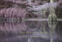 Purple Delight / Purple Fairy Tale Color's of our Southeast Texas bayou's. / by Kay Harrington Prints