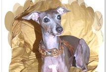 Greyhounds / Italien Greyhound - Galgo - Barzoi & more