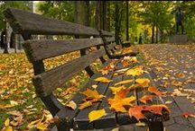 Autumn Leaves / Fall is my most favorite season...