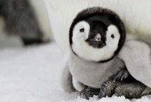 Cute Animals / Funny or cute, which do you prefer well you can look at either on this board