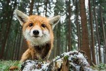 Nature / Natura / Nature, environment, animals, ecology ~*~*~*~*~*~*~*~*~ Przyroda, zwierzęta, środowisko, ekologia