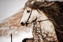 Horses! / by Amanda Baker