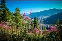 My region PACA / Share here your pictures and vidéos of region Provence-Alpes-Côte-d'Azur. Show us what is our region for you ! ///  Partagez ici vos photos et vidéos de la région Provence-Alpes-Côte-d'Azur. Montrez-nous ce qu'est notre région pour vous !