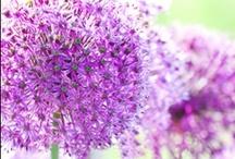 INN Bloom