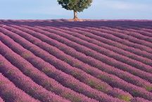 Purple / Because of it's famous lavender fields, the color purple isn't as rare in the Provence Alps Mediterranean region as it is elsewhere. Often the purple is combined with green or yellow, making it stand out.
