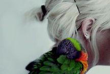 Lilas, fée des bois, reine des oiseaux.