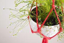 Plants    urban