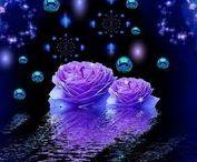 Blue& Purple